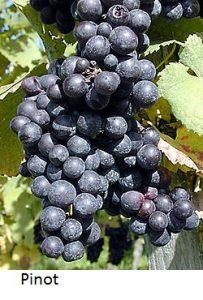 La producción de vino