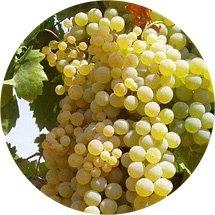 Spanische Weinregionen