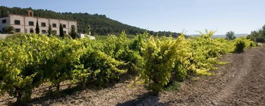 Weine aus dem Weingut Grupo Matarromera