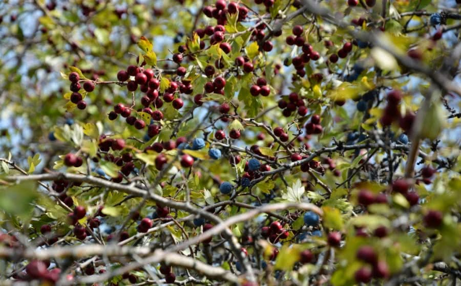 Pacharan vom Weingut Selva de Oza