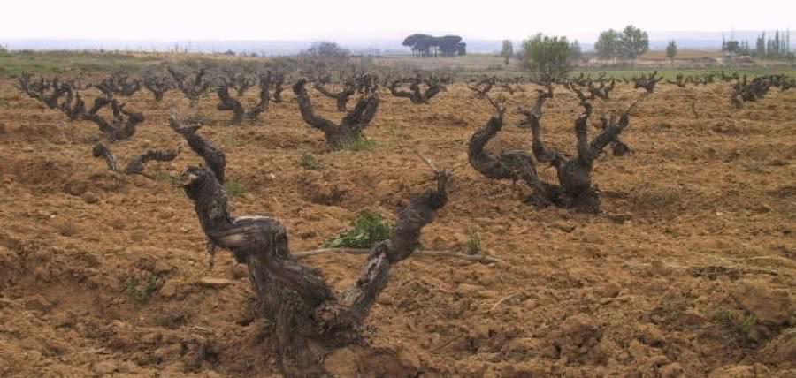 Weine aus dem Weingut Telmo Rodriguez