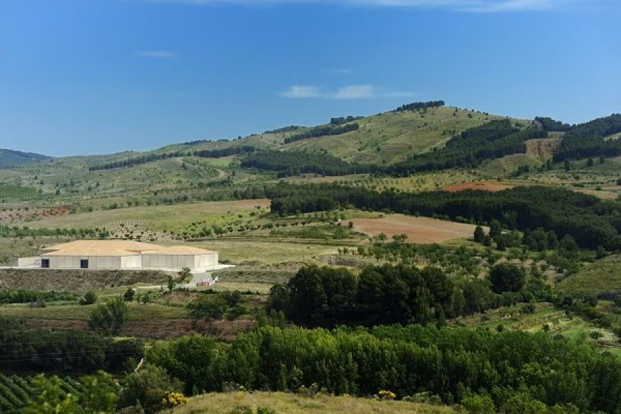 Calatayud Wein vom Weingut Ateca