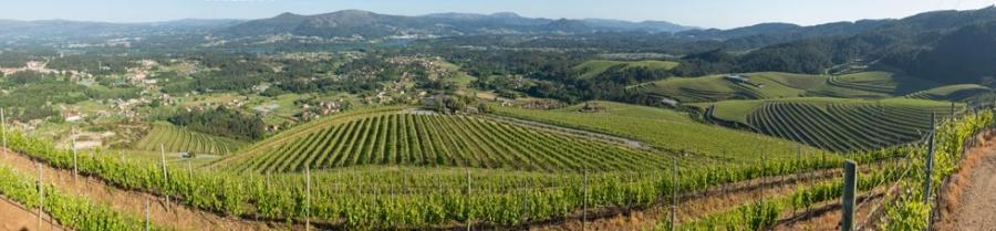 Rias Baixas Weine vom Weingut Adegas Tollodouro