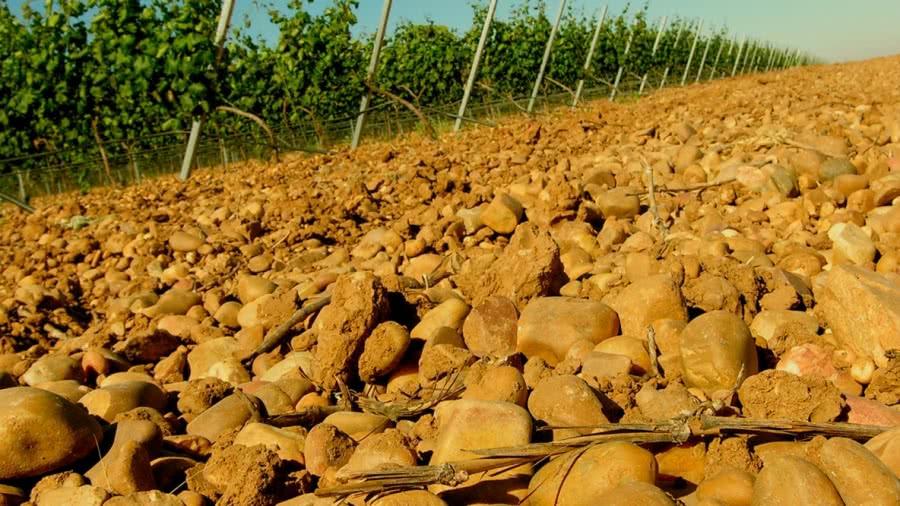 Weißweine vom Weingut Angel Lorenzo Cachazo