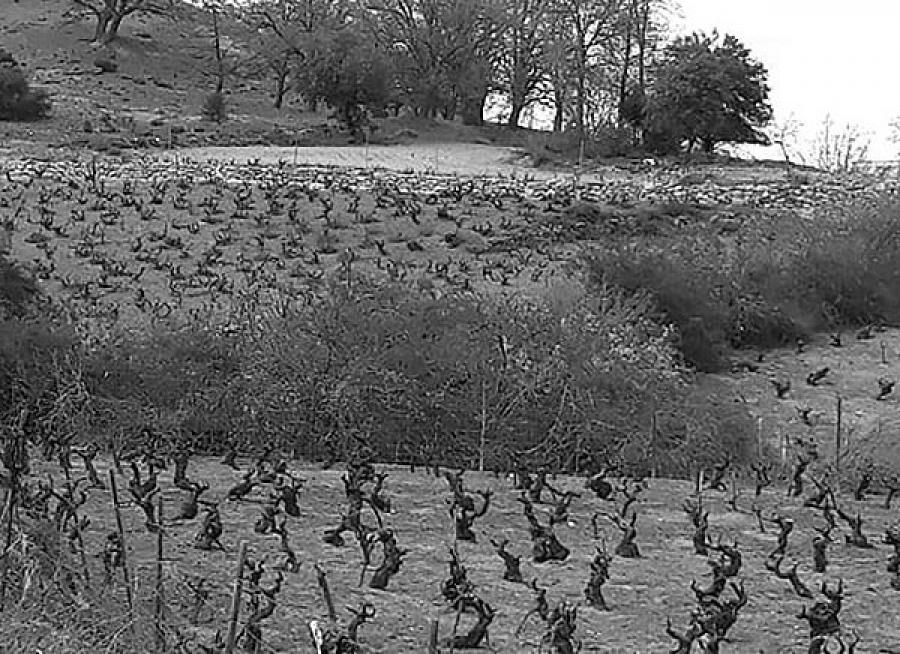 Rotweine vom Weingut Dominio de ES