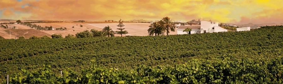 Spanische Weine vom Weingut Finca Moncloa