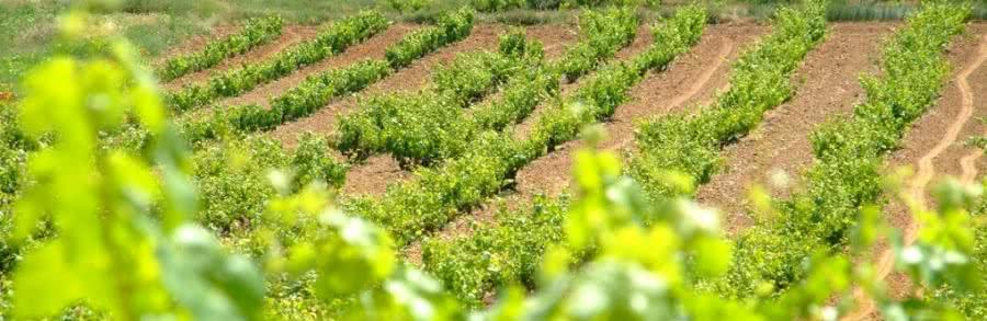 Rotwein vom Weingut Hacienda Solano
