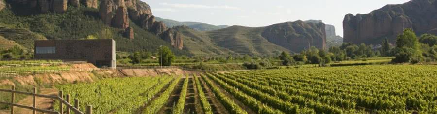 Rotweine aus dem Weingut Proelio