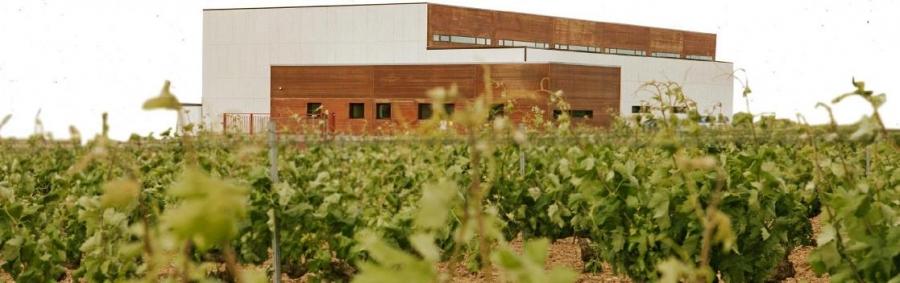 Aktuelle Weine aus dem Weingut Salvueros