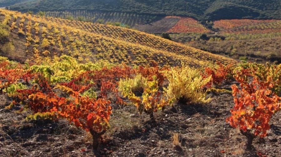 Rotwein vom Weingut Serra & Lample