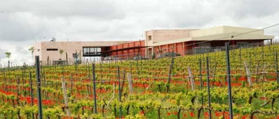 Spanische Weine vom Weingut Comenge