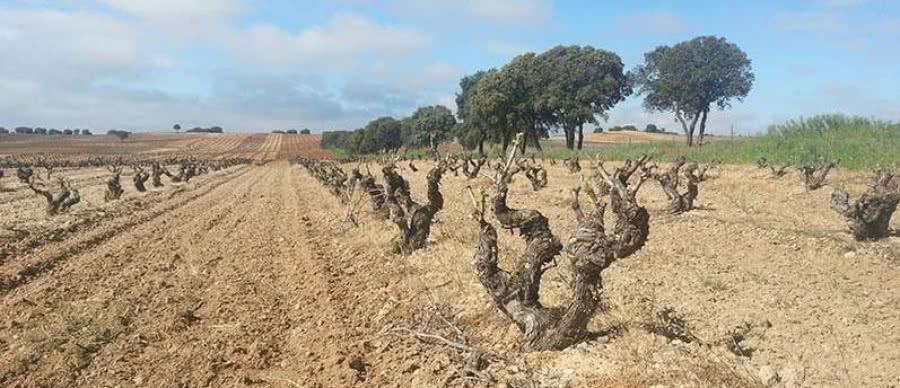 Hochwertige Rotweine aus dem Weingut Ébano