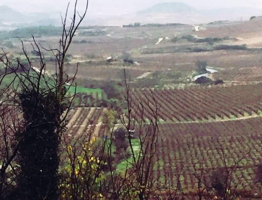Spanische Weine aus dem Weingut Eduardo Garrido