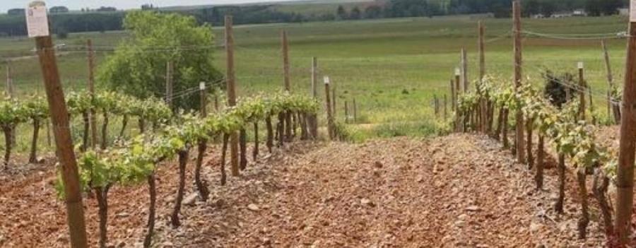 Leon Weine vom Weingut Gordonzello
