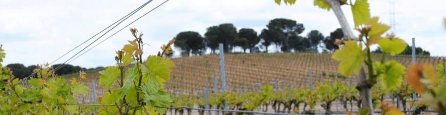 Weißweine vom Weingut Javier Ruiz
