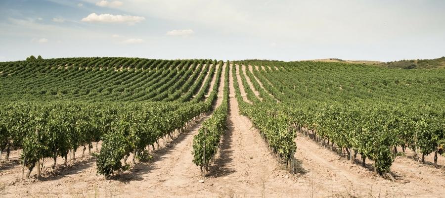 Verdejo-Wein vom Weingut Vega de la Reina