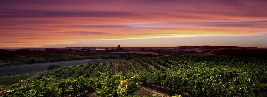 Rotweine aus dem Weingut Valtostao