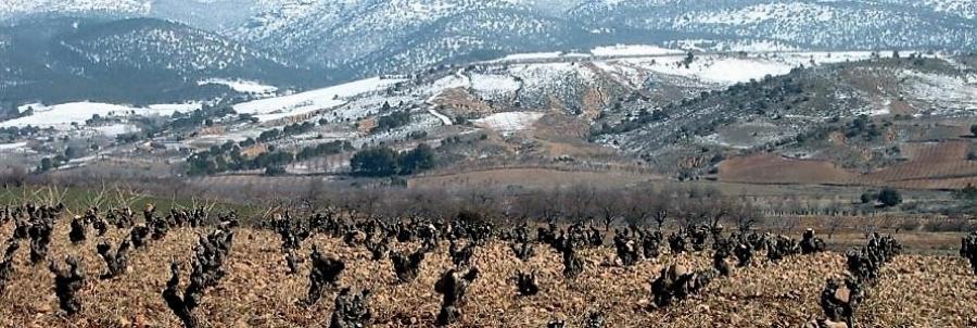 Rot- und Weißweine aus dem Weingut Coop Virgen de la Sierra