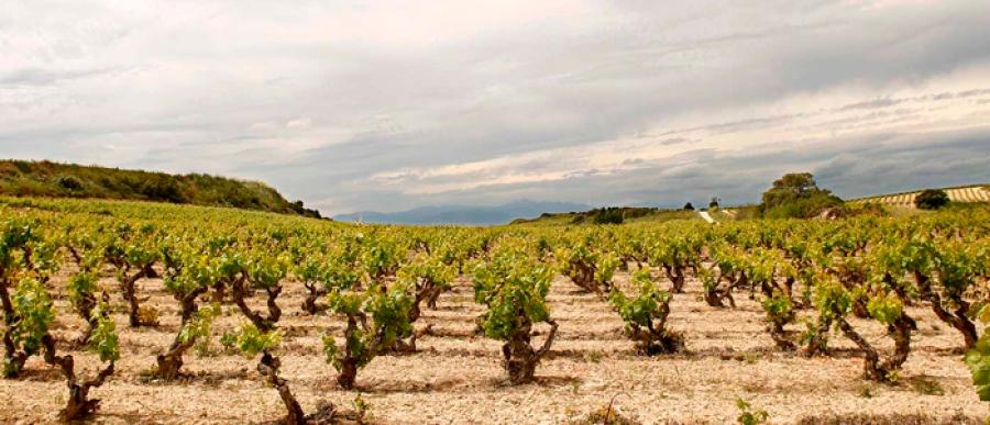 Rioja-Weine aus dem Weingut El Conjuro del Ciego