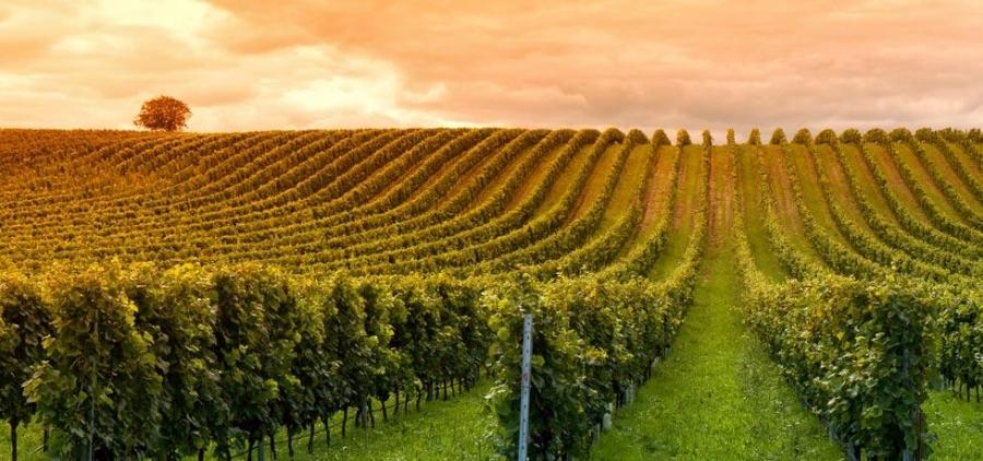 Wines from the D.O. Ribera del Duero