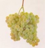 Albariño grape