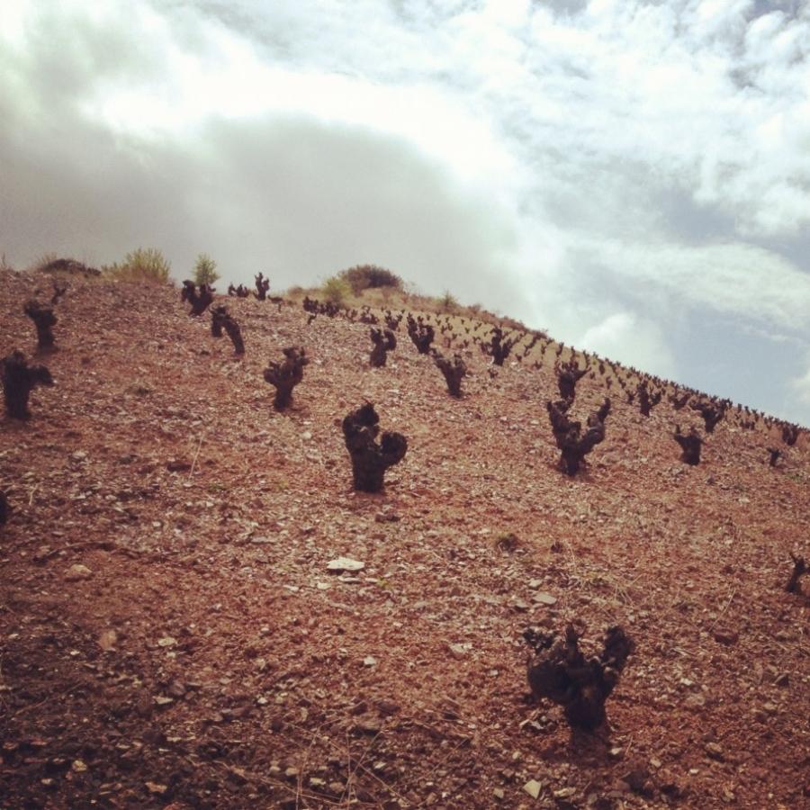 Calatayud-Weine aus dem Weingut Breca