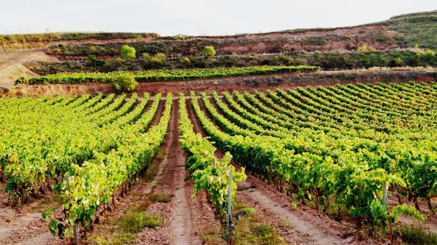 Rioja-Weine aus dem Weingut Najerillas
