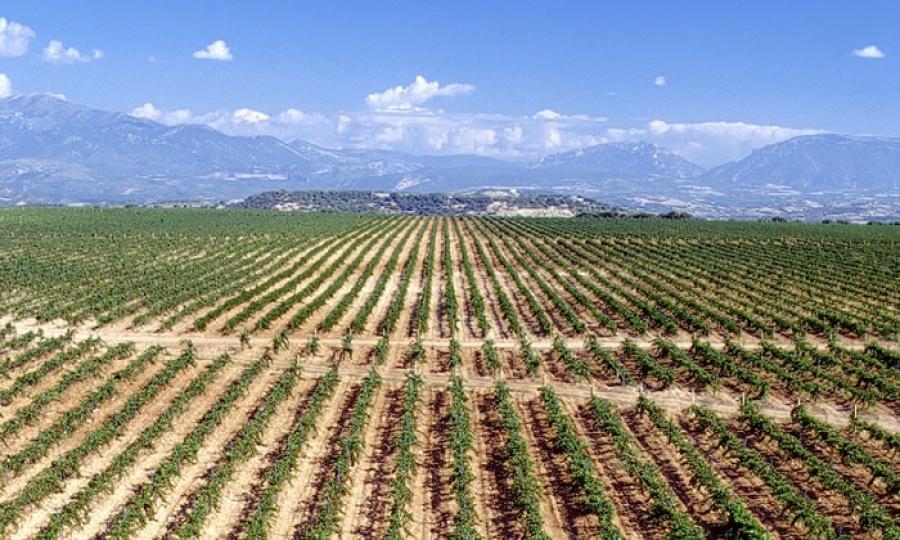 Spanische Weine aus dem Weingut Leceranas