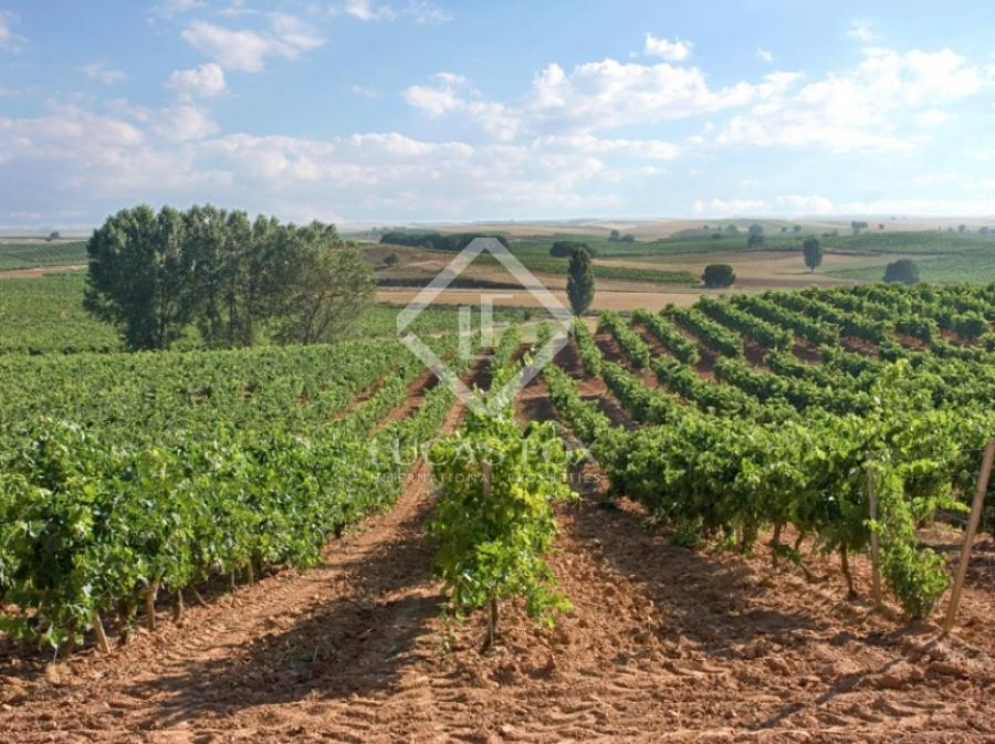 Spitzenweine vom Weingut Campos Góticos