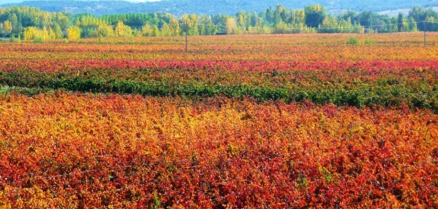 Rotweine vom Weingut Viñedos Martin Berdugo