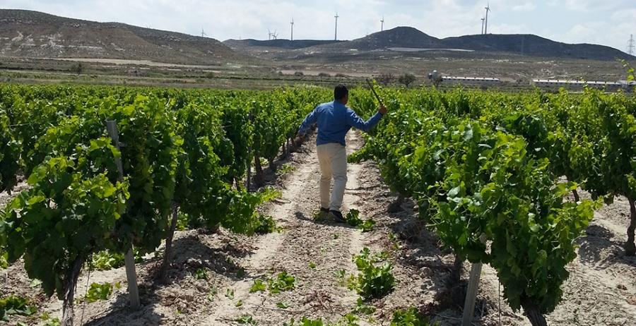 Weißwein vom Weingut Picos