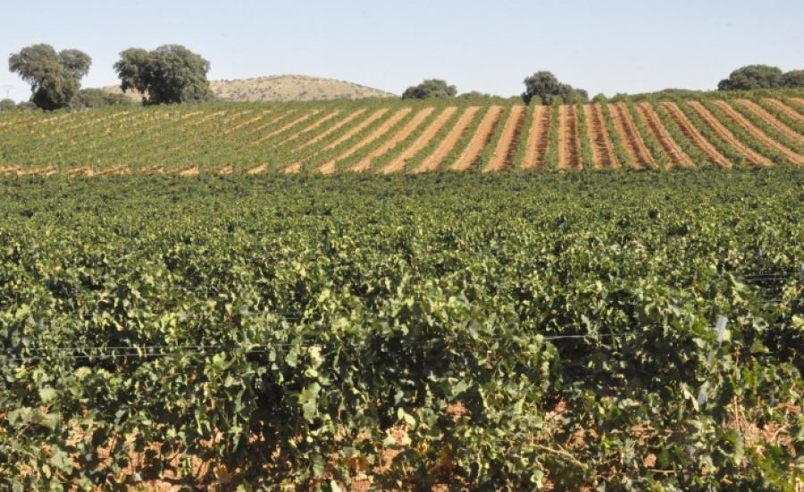 Spanischer Wein vom Weingut Viñedos de Aromaz