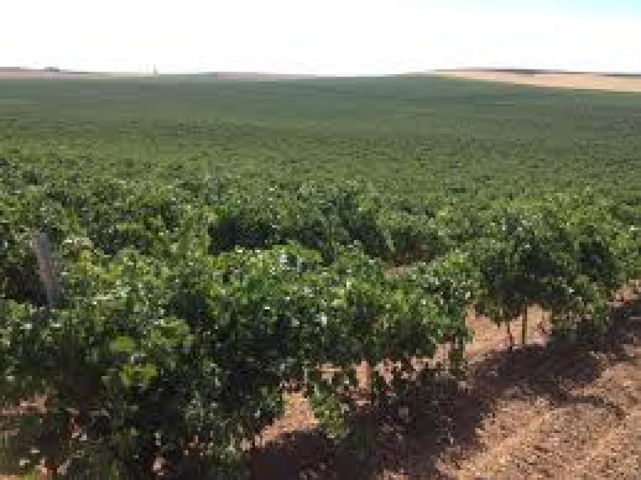 Weißweine aus dem Weingut JFarriezu