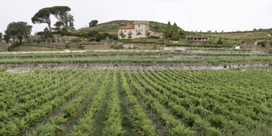 Weißweine aus dem Weingut Marqués de Vizhoja