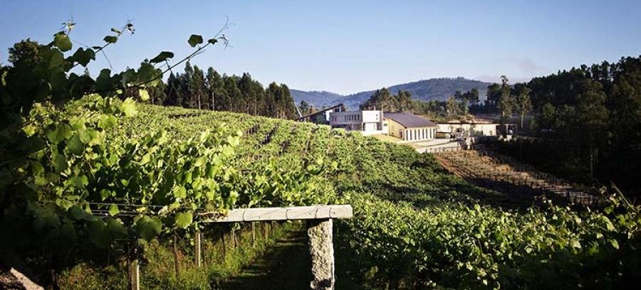 Weißweine aus dem Weingut Mar de Frades