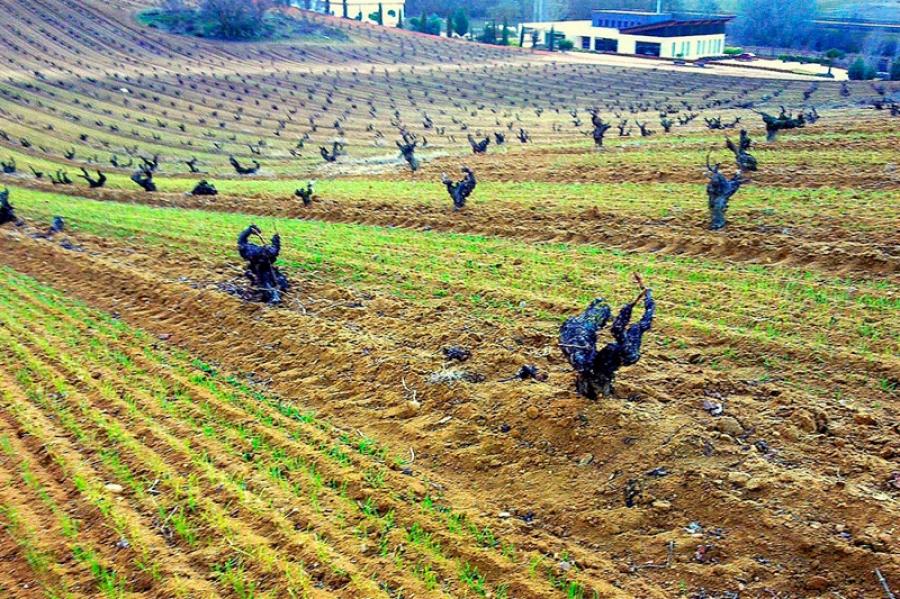 Qualitätsrotweine aus Rioja
