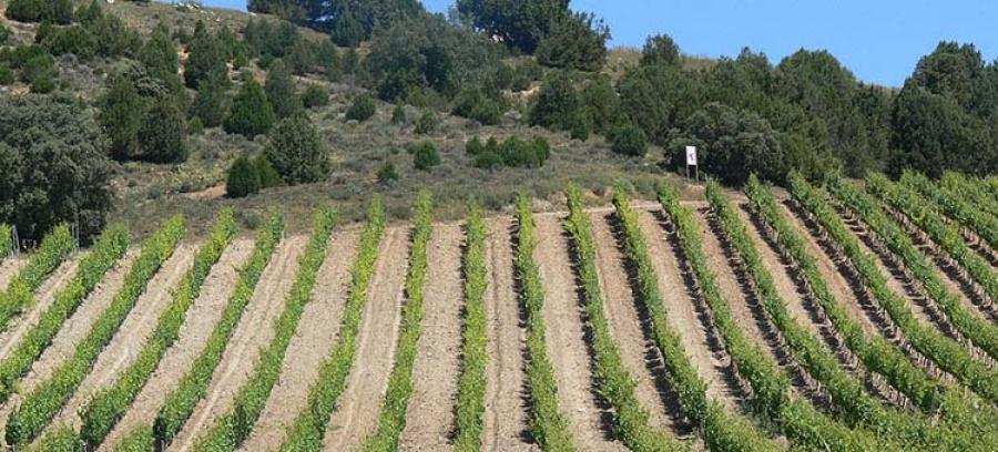 Hochwertige Rotweine vom Weingut Viñedos del Jaro