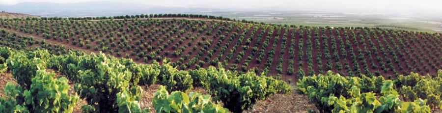 Rot-, Weiß- und Roséweine aus dem Weingut Gabarda