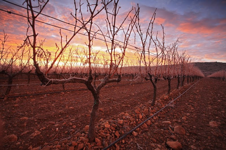 Wines from the D.O. Campo de Borja