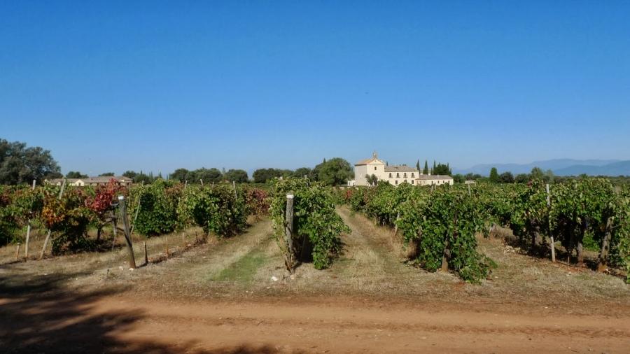 Valdepusa Domain Wine