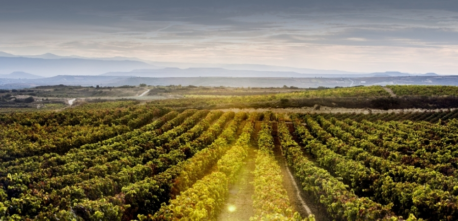 Spanische Weine aus dem Weingut Azpilicueta