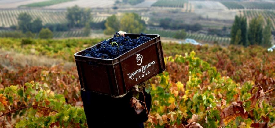 Weine des Weinguts Ramon Bilbao