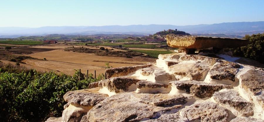 Qualitätsweine aus dem Weingut Solar Viejo