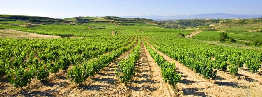 Verdejo Weißwein vom Weingut Marques de Irún