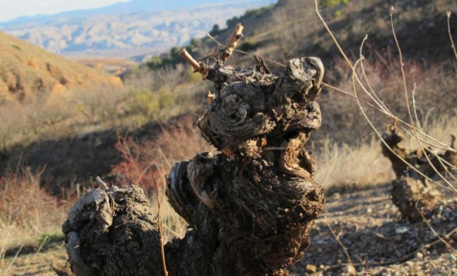 Spanische Weine aus dem Weingut Alianza de Garapiteros