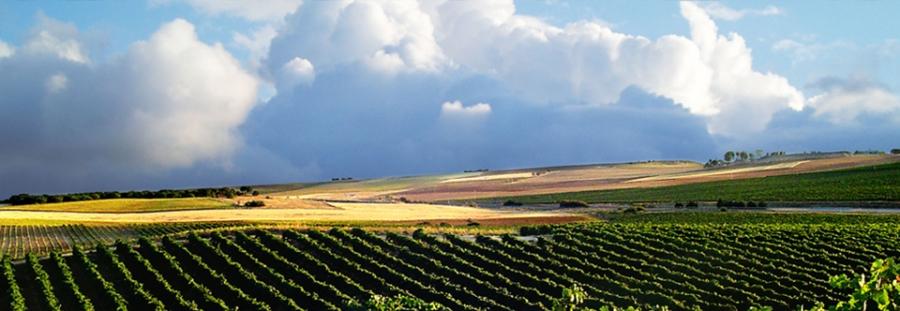 Weine des Weinguts Pago de Traslagares