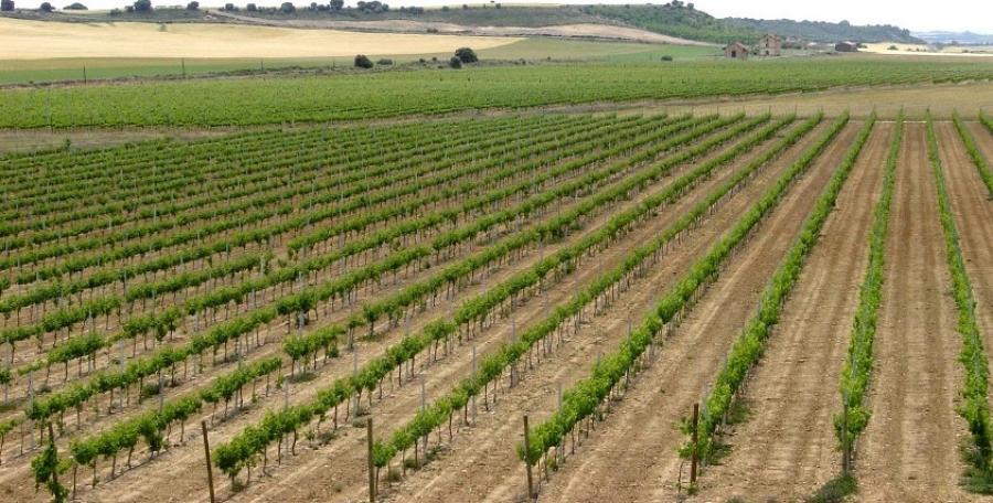 Spanische Weine aus dem Weingut Edra