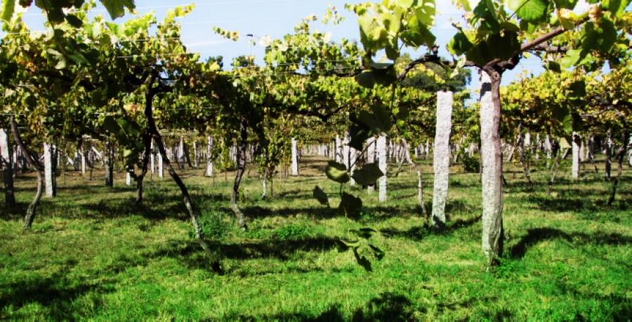 Spanische Weine vom Weingut Vazquez Nieves