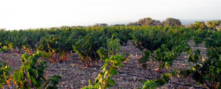 Somontano-Weine vom Weingut Sers
