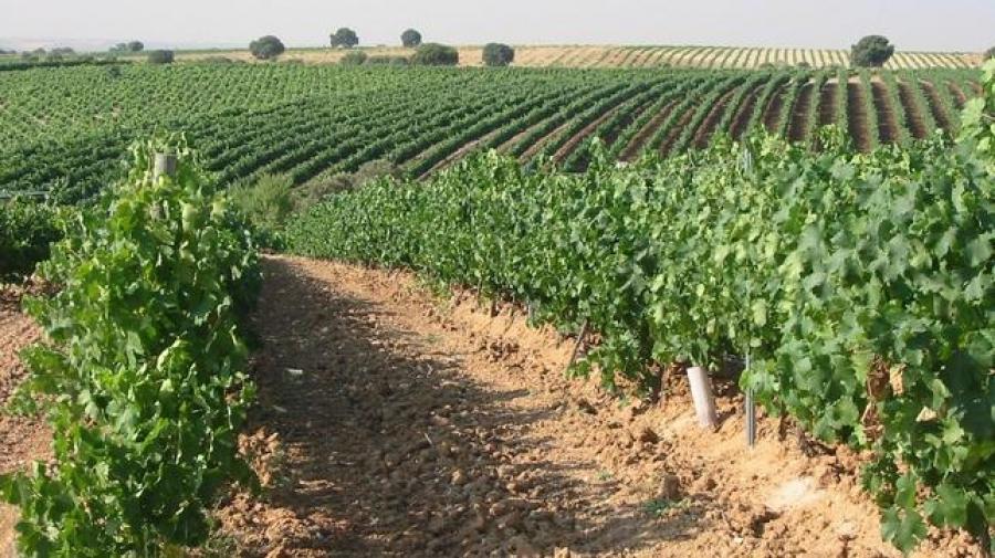 Wines of Madrid